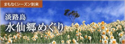 淡路島の水仙郷が間もなくシーズンイン