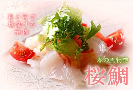 【春の風物詩】 淡路島の桜鯛