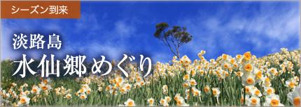 シーズン到来 淡路島 水仙郷めぐり